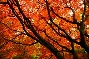 Orange Autumn Branches by Luke Andrew Scowen