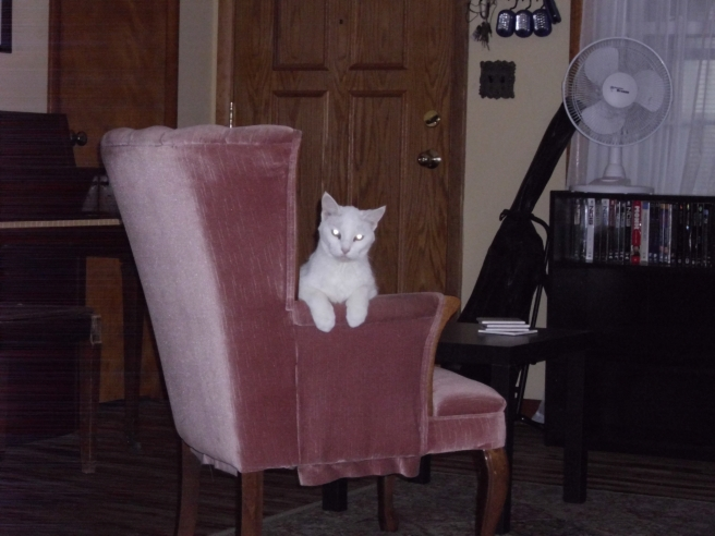 Queen Winnie on her throne. (She really likes that chair.)
