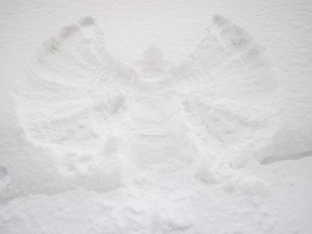 angel-15702_640